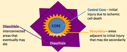 Diagram detailing the series of events that occur after a central nervous system injury including central core, Penumbra, and diaschisis